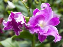 Weiße Orchidee in einem Topf im Garten lizenzfreie stockfotos