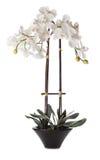 Weiße Orchidee im Potenziometer Lizenzfreies Stockbild