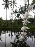 Weiße Orchidee im Spiegelwasser Lizenzfreies Stockbild