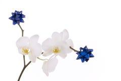 Weiße Orchidee mit Dekoration. Stockbild