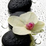 Weiße Orchidee mit Zensteinen Lizenzfreie Stockbilder