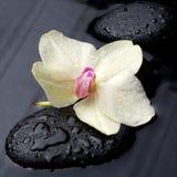 Weiße Orchidee mit Zensteinen Lizenzfreie Stockfotografie