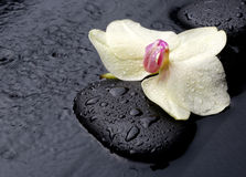Weiße Orchidee mit Zensteinen Stockfotografie