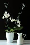 Weiße Orchidee und der Topf Lizenzfreie Stockbilder