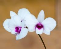 Weiße Orchideeblume in einem Park Stockfotos