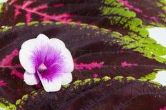 Weiße Orchideeblumen Lizenzfreies Stockfoto