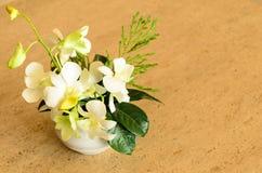 Weiße Orchideen Lizenzfreies Stockfoto