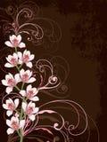 Weiße Orchideen mit rosafarbenen Strudeln lizenzfreie abbildung