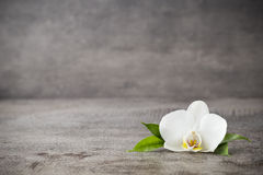 Weiße Orchideen- und Badekurortsteine auf dem grauen Hintergrund stockfotos