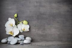 Weiße Orchideen- und Badekurortsteine auf dem grauen Hintergrund Lizenzfreie Stockfotografie