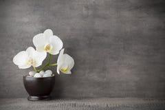Weiße Orchideen- und Badekurortsteine auf dem grauen Hintergrund stockbild