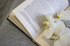 Weiße Orchideenblume auf einem offenen Buch stockfoto