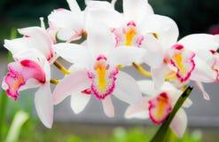 Weiße Orchideenblumenblätter im Garten Stockbilder
