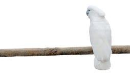 Weiße Papageien auf einem Pol Stockfotos