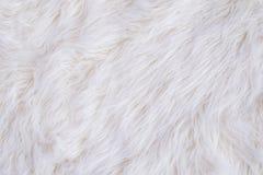 Weiße Pelzbeschaffenheit Stockbilder