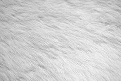 Weiße Pelzhintergrundbeschaffenheit für Hintergrund Foto auf Lager Stockfoto