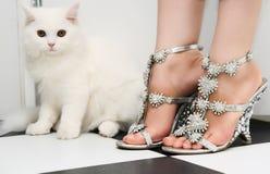 Weiße persische Kätzchen- und Modeschuhe lizenzfreie stockbilder