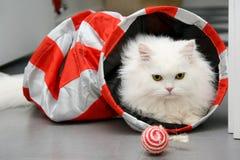 Weiße persische Katze, die mit Spielwaren spielt lizenzfreie stockfotografie