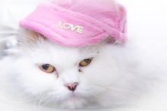 Weiße persische Katze mit rosa Hut Lizenzfreie Stockfotografie