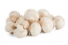 Weiße Pilze Lizenzfreie Stockfotografie