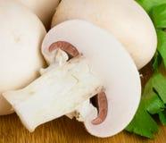 Weiße Pilze Stockbild