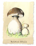 Weiße Pilze Lizenzfreie Stockbilder