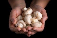Weiße Pilze in den Frauenhänden auf schwarzem Hintergrund lizenzfreie stockfotos