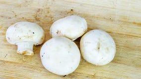 Weiße Pilzfrüchte Stockfotografie