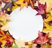 Weiße Platte lizenzfreie stockbilder