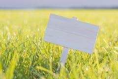 Weiße Platte in einer sonnigen Wiese Stockfoto