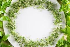 Weiße Platte mit einem Rahmen des Kressesalats und -basilikums auf hölzerner Rückseite Stockfoto