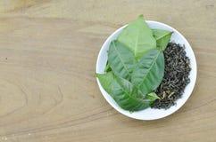 Weiße Platte mit frischen Teeblättern und trocknen auf Holztisch Lizenzfreies Stockfoto