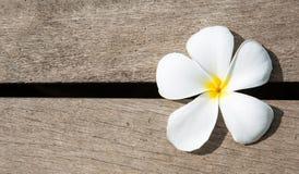 Weiße Plumeriablume auf hölzernem Muster stockbilder