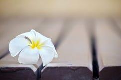 Weiße Plumeriablume auf Lattenboden Stockbilder
