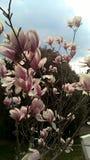 Weiße purpurrote Blumen lizenzfreies stockfoto