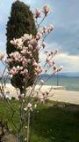 Weiße purpurrote Blumen lizenzfreie stockfotografie