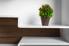 Weiße Regale und Grünpflanze im Topf Lizenzfreie Stockbilder