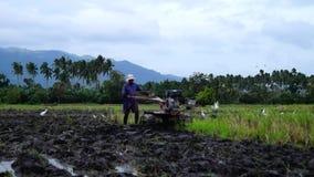 Weiße Reiher fliegen, während Landarbeiter den Handtraktor benutzt, der Maschine pflügt, um sich für das Reispflanzen vorzubereit stock video