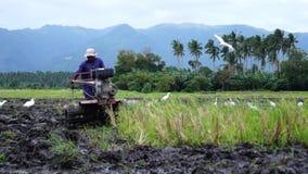 Weiße Reiher fliegen, während Landarbeiter den Handtraktor benutzt, der Maschine pflügt, um sich für das Reispflanzen vorzubereit stock footage