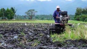Weiße Reiher fliegen, während Landarbeiter den Handtraktor benutzt, der Maschine pflügt, um sich für das Reispflanzen vorzubereit stock video footage