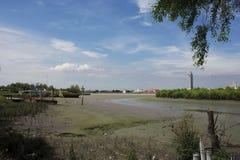 Weiße Reiher Vögel auf Land während Wasserspiegel oben in Mündung vom Chao Phraya Lizenzfreie Stockfotografie