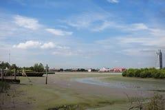 Weiße Reiher Vögel auf Land während Wasserspiegel oben in Mündung von Cha Lizenzfreie Stockfotos