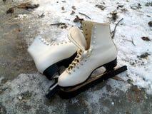Weiße Rochen auf Eis Stockfotografie