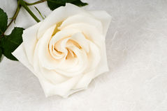 Weiße Rose auf strukturiertem Papier Stockfotos