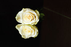 Weiße Rose mit Reflexion auf einem Hintergrund von Wenge Lizenzfreie Stockfotografie