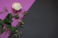 Weiße Rose und Trockenblumen auf violettem und schwarzem geometrischem Hintergrund whith Kopienraum stockbilder