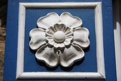 Weiße Rose von York Lizenzfreie Stockfotografie