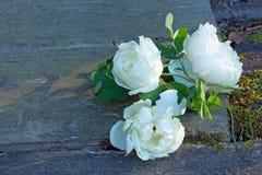 Weiße Rosen Lizenzfreie Stockbilder