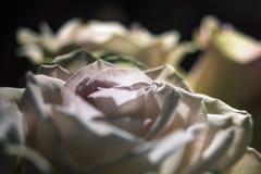 Weiße Rosen Lizenzfreie Stockfotos