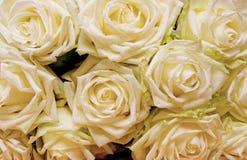 Weiße Rosen Abstraktionsabbildung für Hochzeit Stockbild
